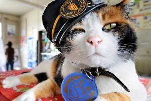 La gata Tama es oficialmente la jefa de la estación de Kishi, en Japón. Foto: Uludagsozluk gallery.