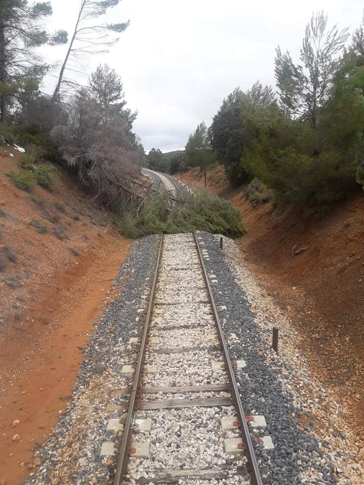Fotografía de un árbol caído sobre la vía de la línea Cuenca-Utiel difundida por Compromís, en la que se puede ver el mal estado de la infraestructura.
